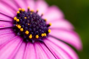 reto 11 plantas y flores Alberto Gallardo Sousa