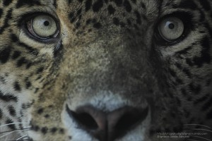 reto 57 animales Ignacio Jurado Sánchez